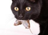 cat3 (1)